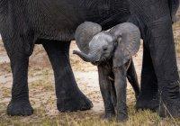 Парк дикой природы в Африке отметил год без убитых слонов