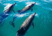Ученые обеспокоены массовой гибелью дельфинов в США