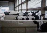 Ученые предсказали метановую катастрофу