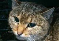 Редкую кошку-лису нашли во Франции