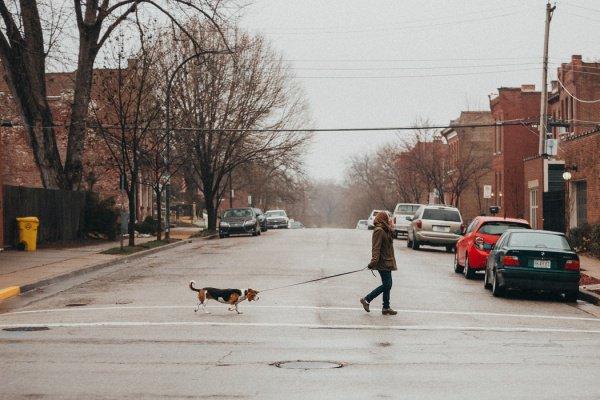Человеческий стресс, говорят ученые, влияет на собак и заставляет их переживать