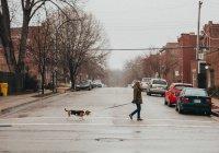 Ученые: собаки чувствуют стресс человека
