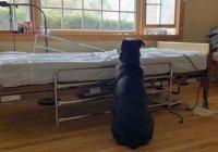 В США пес остался ждать умершего хозяина возле больничной койки