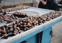 Обнаружена польза шоколада для продления жизни