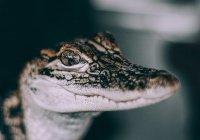 Около школы в Симферополе нашли крокодила (ФОТО)