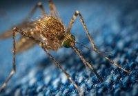 Выяснилось, как комары выбирают «жертв» для укуса