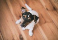 В Санкт-Петербурге пес спас новорожденную девочку
