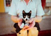 Можно ли по Исламу продавать домашних животных?