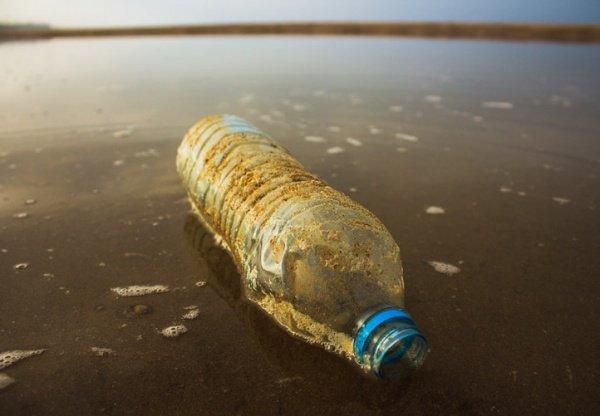 Каждую неделю в среднем в организм человека попадает до 5 граммов пластика