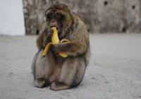 Найдены древние технологии, принадлежащие обезьянам
