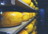 Назван самый полезный сыр