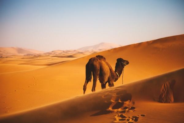 """""""Мусульманин находится в тени своей милостыни"""""""
