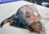 Неопознанное морское существо шокировало австралийцев