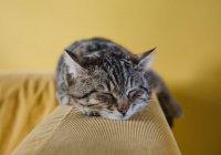 В Нижнем Новгороде хозяин обвинил кота в поджоге своей квартиры