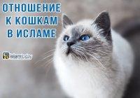 Как звали любимую кошку Пророка Мухаммада (мир ему)?