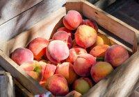Названы фрукты, которые обязательно нужно есть летом