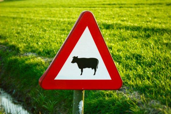 При этом владельцам животных грозят штрафы Фото: Milan De Clercq/Unsplash)