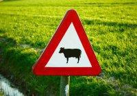 Штрафстоянка для коров появилась в Челябинской области