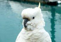 В Австралии с неба упали 60 умирающих попугаев