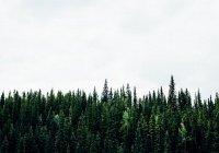 В Иркутской области людям запретили ходить в лес