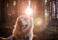 Собака, которая войдет в Рай
