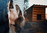 Собаки съели своего хозяина в США