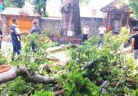 Десятки человек пострадали из-за падения 500-летнего дерева в Азербайджане