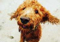 Систему распознавания собак по отпечатку носа создали в Китае