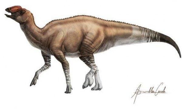 Динозавр, предположительно, добывал себе еду, выкапывая из рыхлой болотистой почвы водные растения (Фото: ICRA Art)