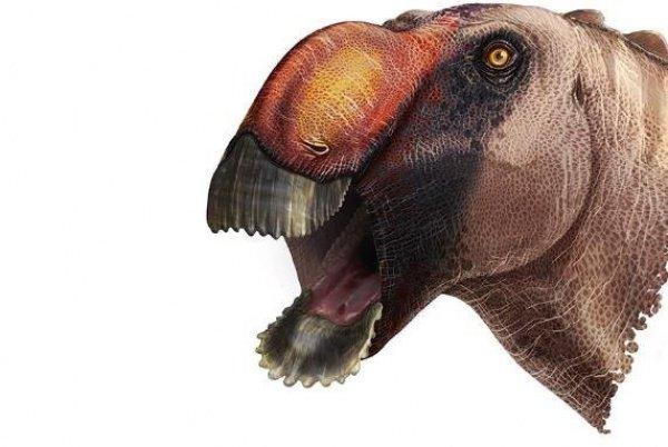 Строением челюстей и носа животное было похоже на современную утку (Фото: ICRA Art)