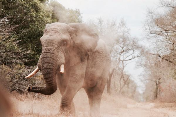 Слоны - животные, упомянутые в Коране