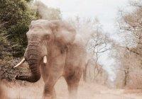 """Почему год рождения Пророка (мир ему) называется """"годом слона""""?"""