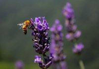 Оценен возможный ущерб в случае гибели 60% пчел