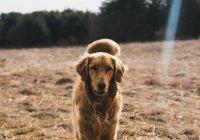 Собака 2 дня бежала в Красноярск к бросившим ее хозяевам