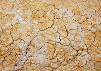 Климатолог предсказал 5-летнюю аномальную жару в России