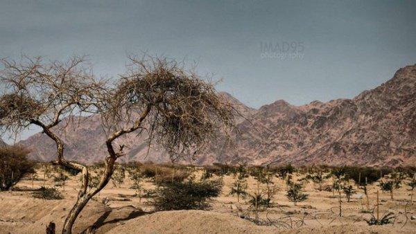 Вади аль-Джинн (Долина джиннов)