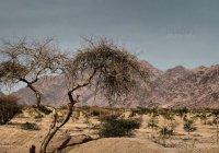 Аномалии в долине Вади аль-Байда: оптическая иллюзия или проделки шайтана?