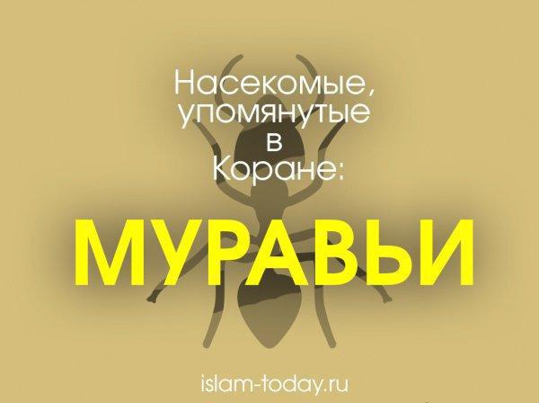 Насекомые, упомянутые в Коране: муравьи