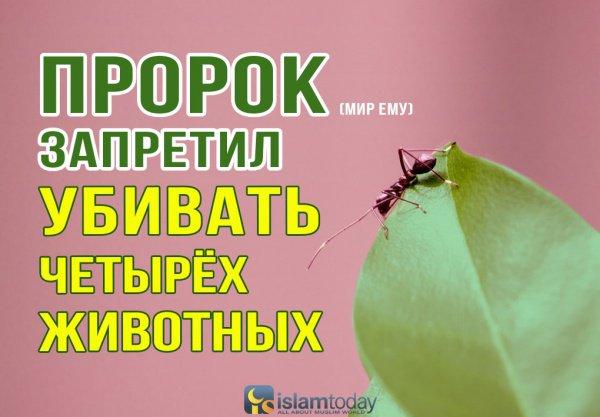 Муравей - насекомое, которое обрадовало пророка Сулеймана (мир ему)