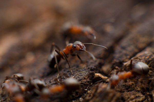 Ученые обнаружили бум в популяции муравьев с каждым периодом роста осадков (Фото: Mikhail Vasilyev/Unsplash)