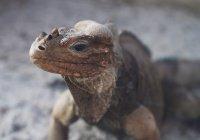 В Бразилии школьник нашел гигантского ящера
