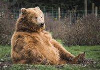В зоопарке Калининграда посетитель пытался накормить медведя сгущенкой