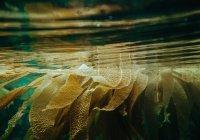 Ученые обеспокоены аномальным ростом водорослей