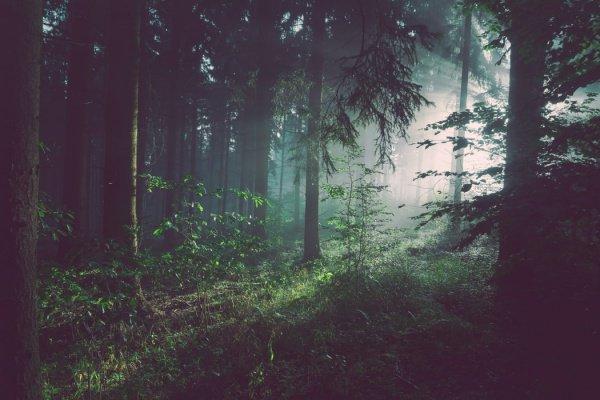 Ученые полагают, что ситуацию способен исправить лес, размер которого достигает 900 млн. гектаров