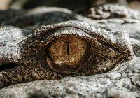 Редкие крокодилы захватили атомную электростанцию в США