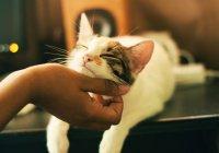 В Шотландии женщина чуть не умерла из-за кота