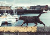 В Англии кошка выжила, упав с 18 этажа