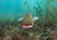 Громадную рыбу поймали в Кировской области