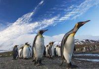 Стало известно, как спасти пингвинов в Антарктиде