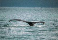 Ученые услышали шепот гладких китов